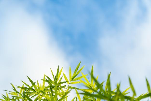 Bamboe en blauwe lucht.
