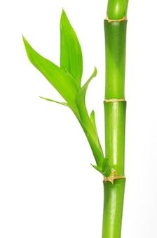 Bamboe geïsoleerd op een witte achtergrond
