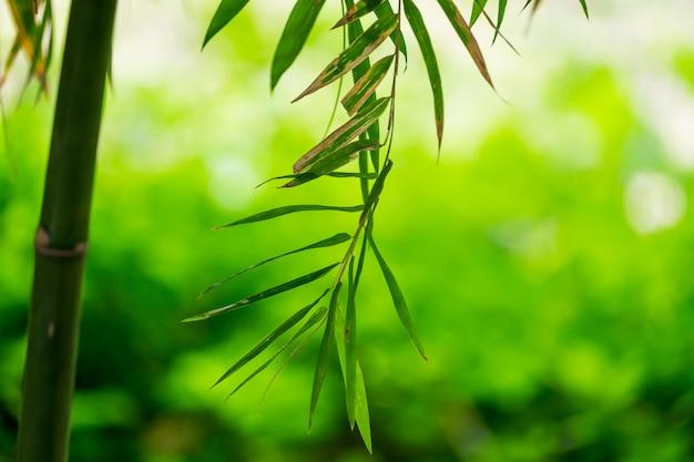 Bamboe groen blad zacht wazig