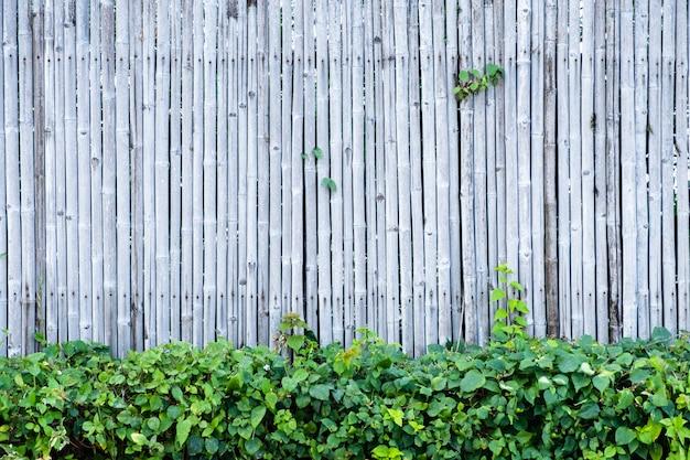 Bamboe hek muur achtergrond en textuur met groene plant decoratie.