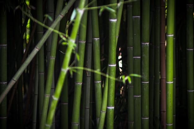 Bamboe struikgewas in het park