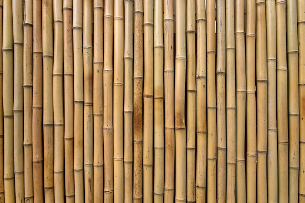 Bamboe textuur