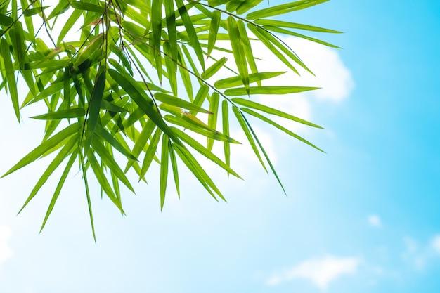 Bamboebladeren en blauwe hemel