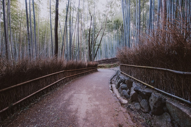 Bamboebos in het platteland van kyoto