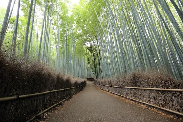 Bamboebos, japanse bamboe in kyoto