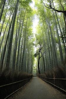 Bamboebos met loopbrug in kyoto japan