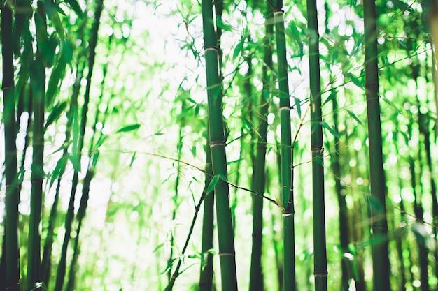Bamboebosje, bamboebos natuurlijke groene achtergrond