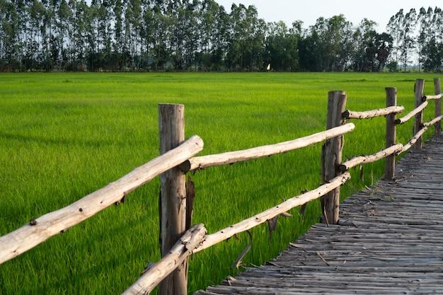 Bamboebrug die zich uitstrekt in de rijstvelden
