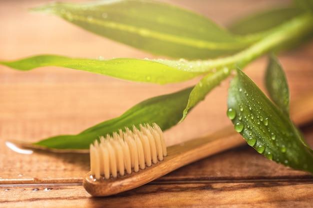 Bamboeplant en milieuvriendelijke tandenborstel op het houten oppervlak