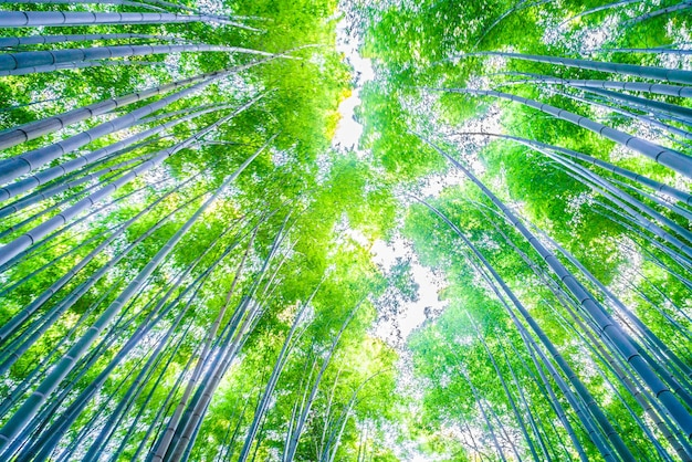 Bamboo bos