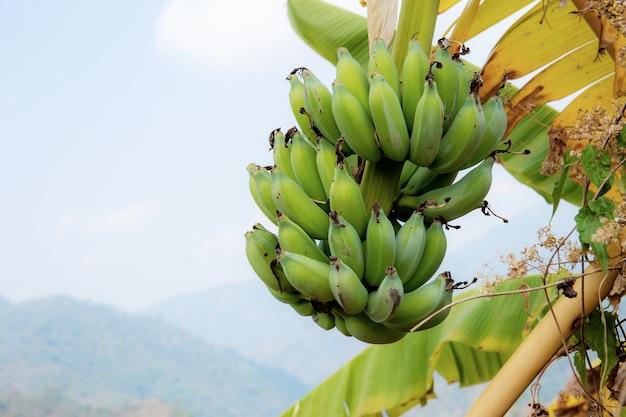 Banaan op boom bij hemel.