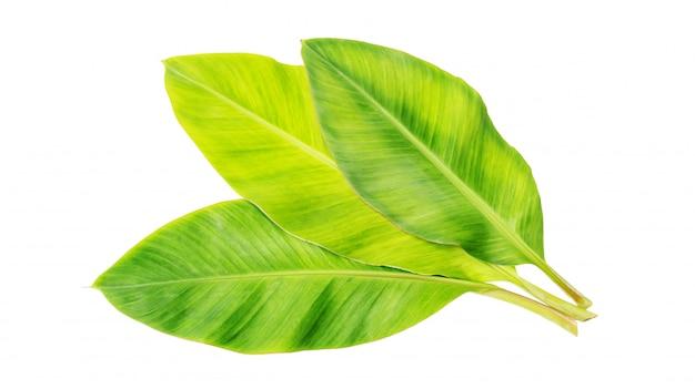 Banaanblad op wit.