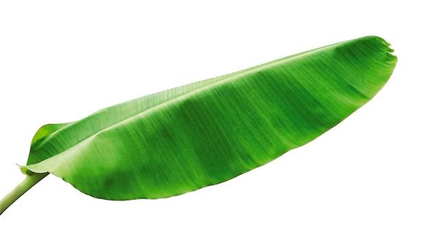 Banaanbladeren op wit worden geïsoleerd dat