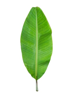 Bananenblad geïsoleerd op een witte muur