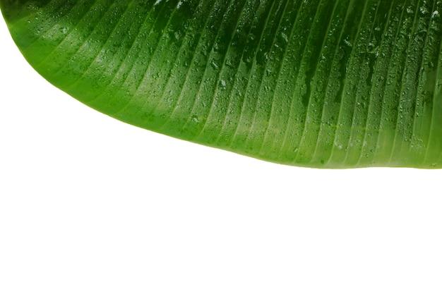 Bananenbladoppervlak en patroon laat ruimte over.