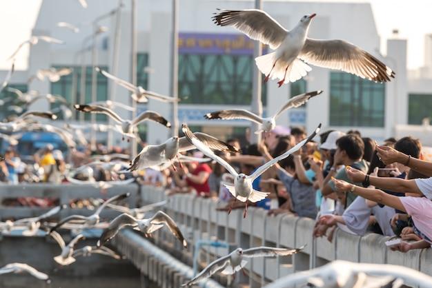 Bang pu en bezoekers die duizenden meeuwen voeren