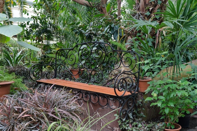 Bank in de botanische serre. tropische decoratieve oranjerie