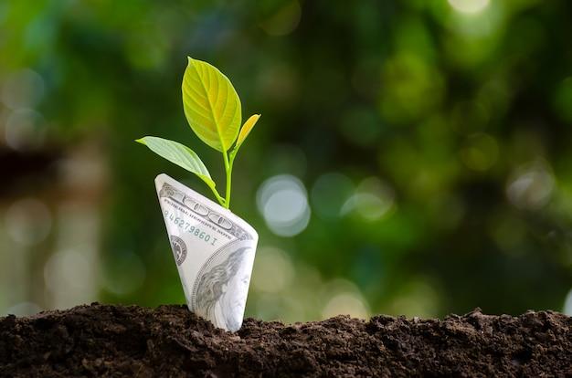 Bankbiljet met plant groeit