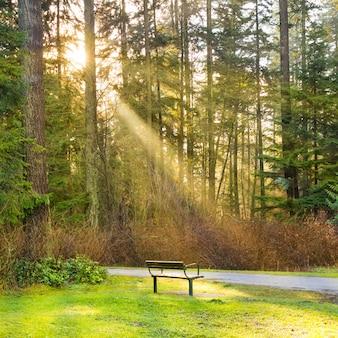 Bankje in het groene stadspark met stralende zon