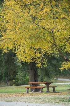 Bankje onder een boom