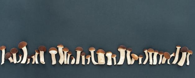 Banner. champignons, honingplaatzwammen op een zwarte achtergrond. zwart stenen bord.