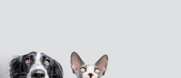 Banner hond en kat op een rij verstopt. geïsoleerd op grijze achtergrond