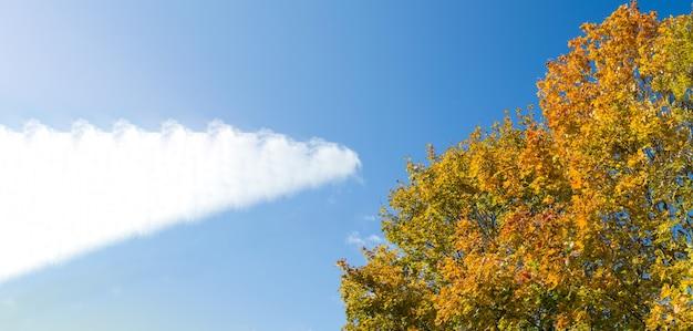 Banner met veelkleurige klonen op een blauwe hemelachtergrond, een plek voor tekst, herfstlandschap