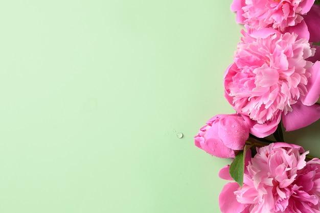 Banner van roze pioenroos bloemen op groene achtergrond.
