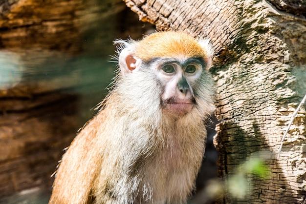 Barbarijse aap zijaanzicht dierlijke aap