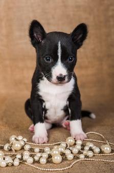 Basenji-puppy zit op sackcloth-achtergrond