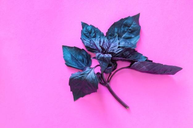 Basilicum kruid bladeren geïsoleerd op roze
