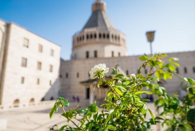 Basiliek van aankondiging en mooie witte roos. nazareth, galilea, israël