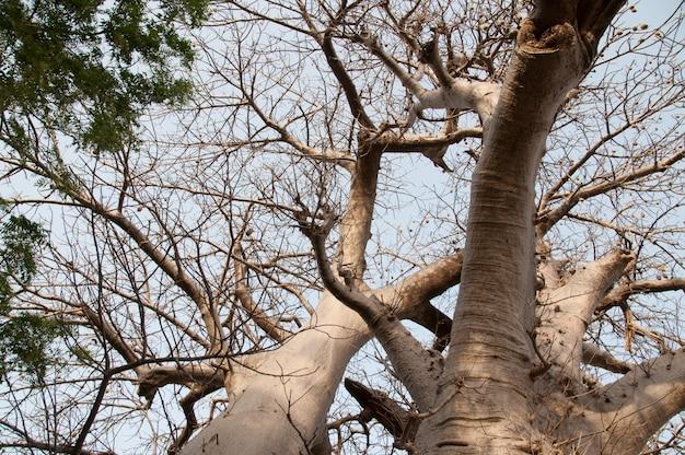 Bassari land senegal, afrika
