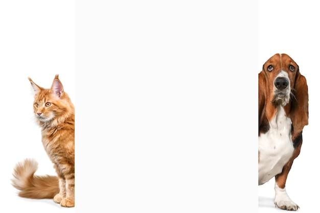 Basset hound hond en kat op achtergrond