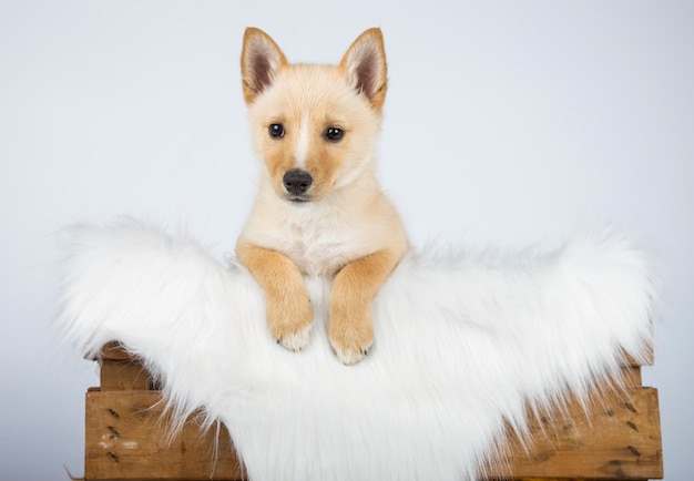 Bastaarde puppy in zijn bed met een witte deken van haar wordt verborgen die