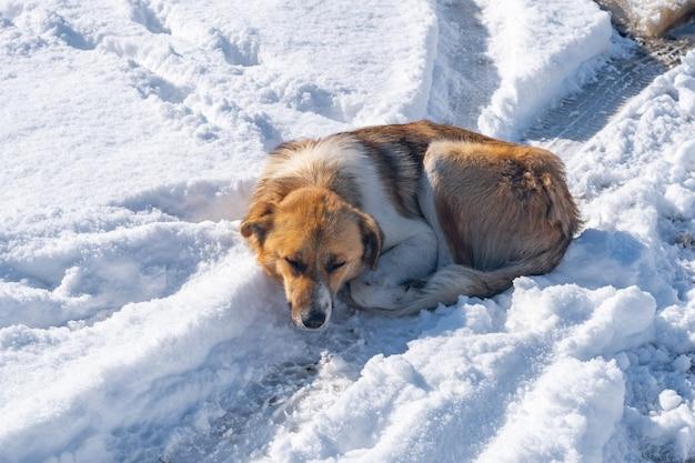 Bastaardhond ligt in de sneeuw op een bandenspoor van een auto. dier