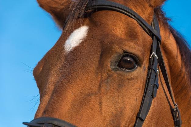 Bay achtergrond boerderij paarden openlucht