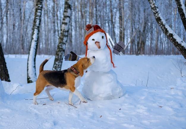 Beagle hond en sneeuwpop in winter besneeuwde bos