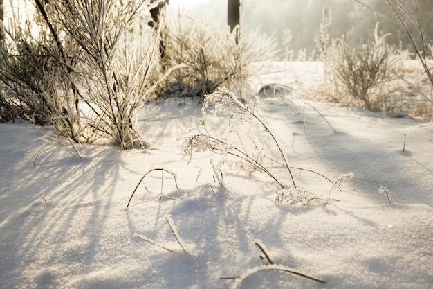 Bedekt met pluizig wit vers sneeuwbos in de winter, landschap in koude ijzige winterse omstandigheden in zonnige heldere dag