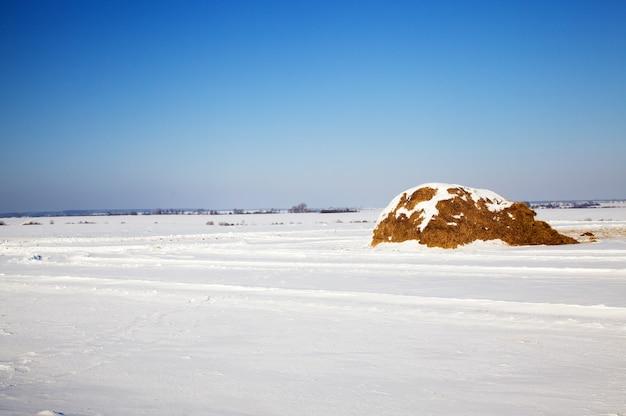Bedekt met sneeuw in de winter