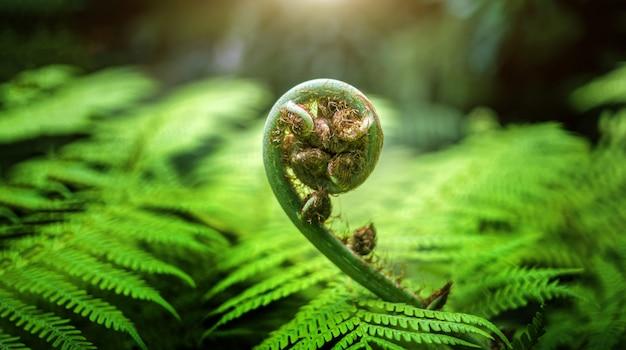 Bederf van regenwoudboom met nieuwe zenuw van hoogste boom