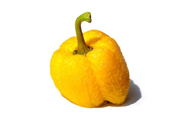 Bedorven gerimpelde gele geïsoleerde peper