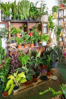 Bedrijf van bloemenwinkel. trendy interieurbloemen en huisontwerp in plantenwinkel. klein bedrijf.