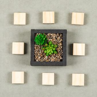 Bedrijfsconcept met plant, houten blokken op grijze oppervlak plat lag.