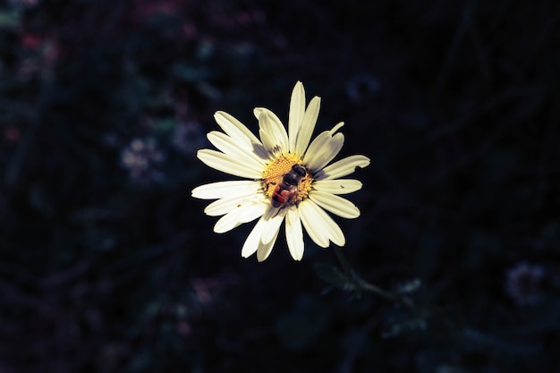 Bee collectie honing bloem hoofd