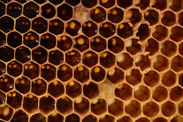Bee honingraten textuur