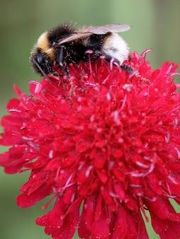 Bee op een bloem