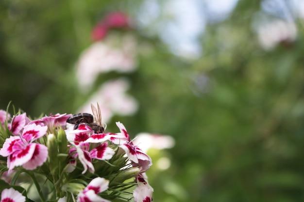 Bee sittin op een tuinbloem