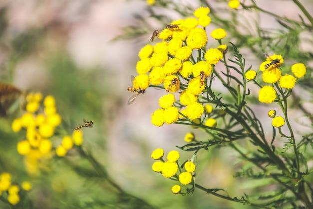 Bee verzamelen van nectar van een bloem in een veld op de weide