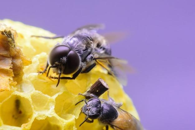 Bee zorgt voor honingraat